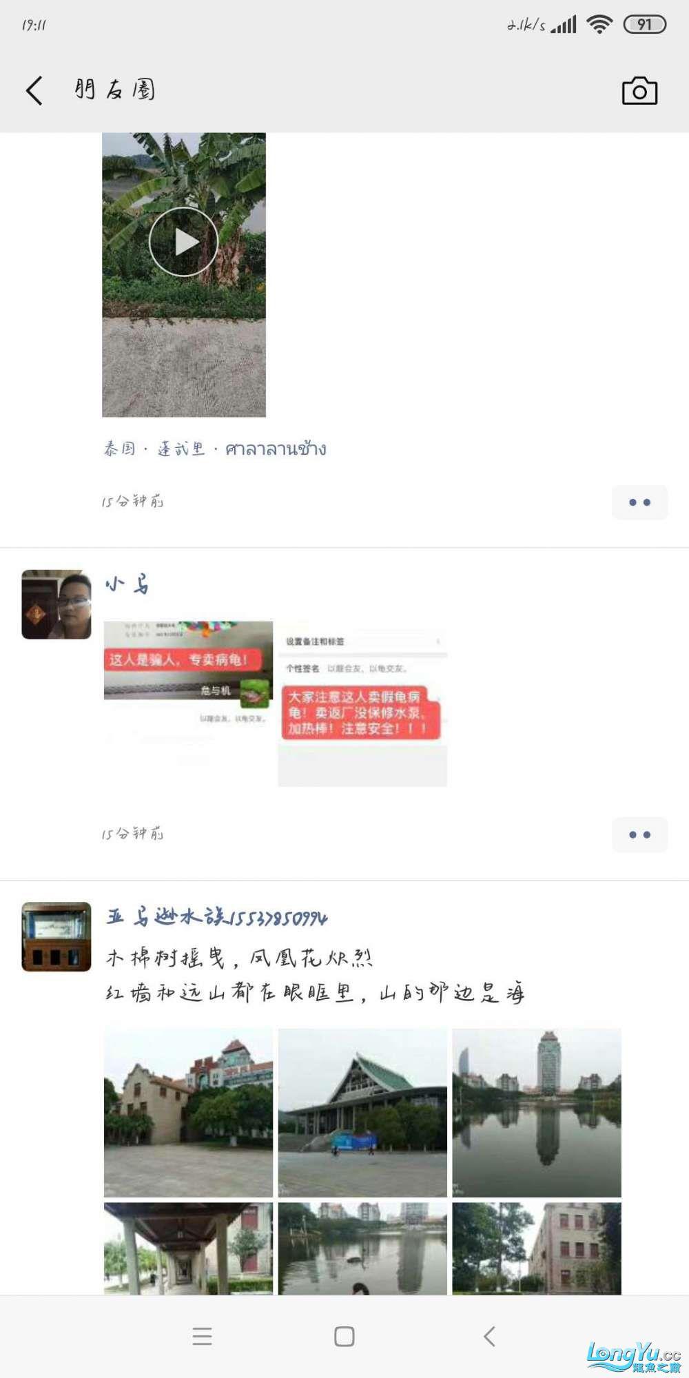 【西安四纹印尼虎苗】广州龟佬是个骗子?