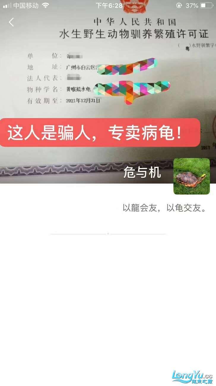 【西安四纹印尼虎苗】广州龟佬是个骗子? 西安观赏鱼信息 西安博特第2张