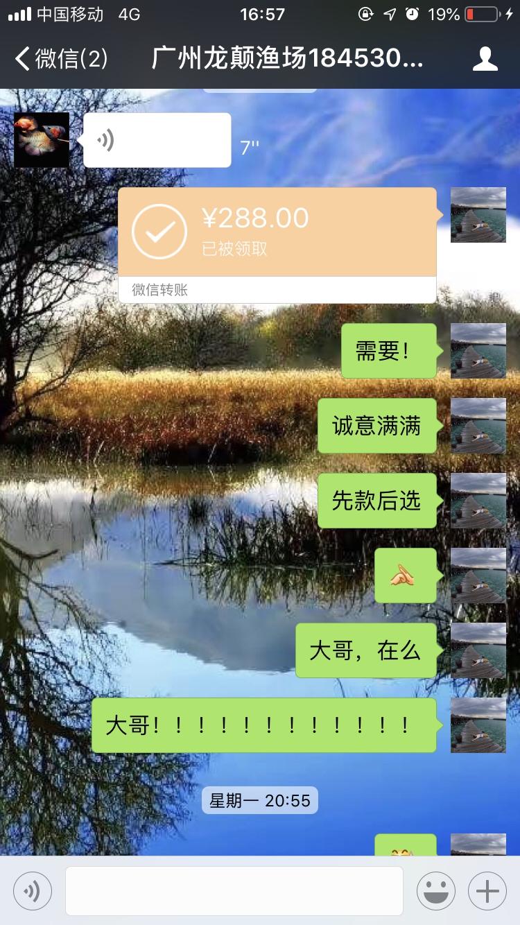 【西安海水鱼批发】小心这个是骗子广州龙巅渔场 西安龙鱼论坛 西安博特第2张