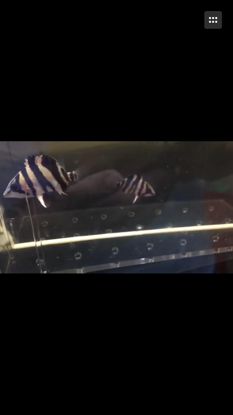 【西安海水鱼批发】小心这个是骗子广州龙巅渔场 西安龙鱼论坛 西安博特第8张