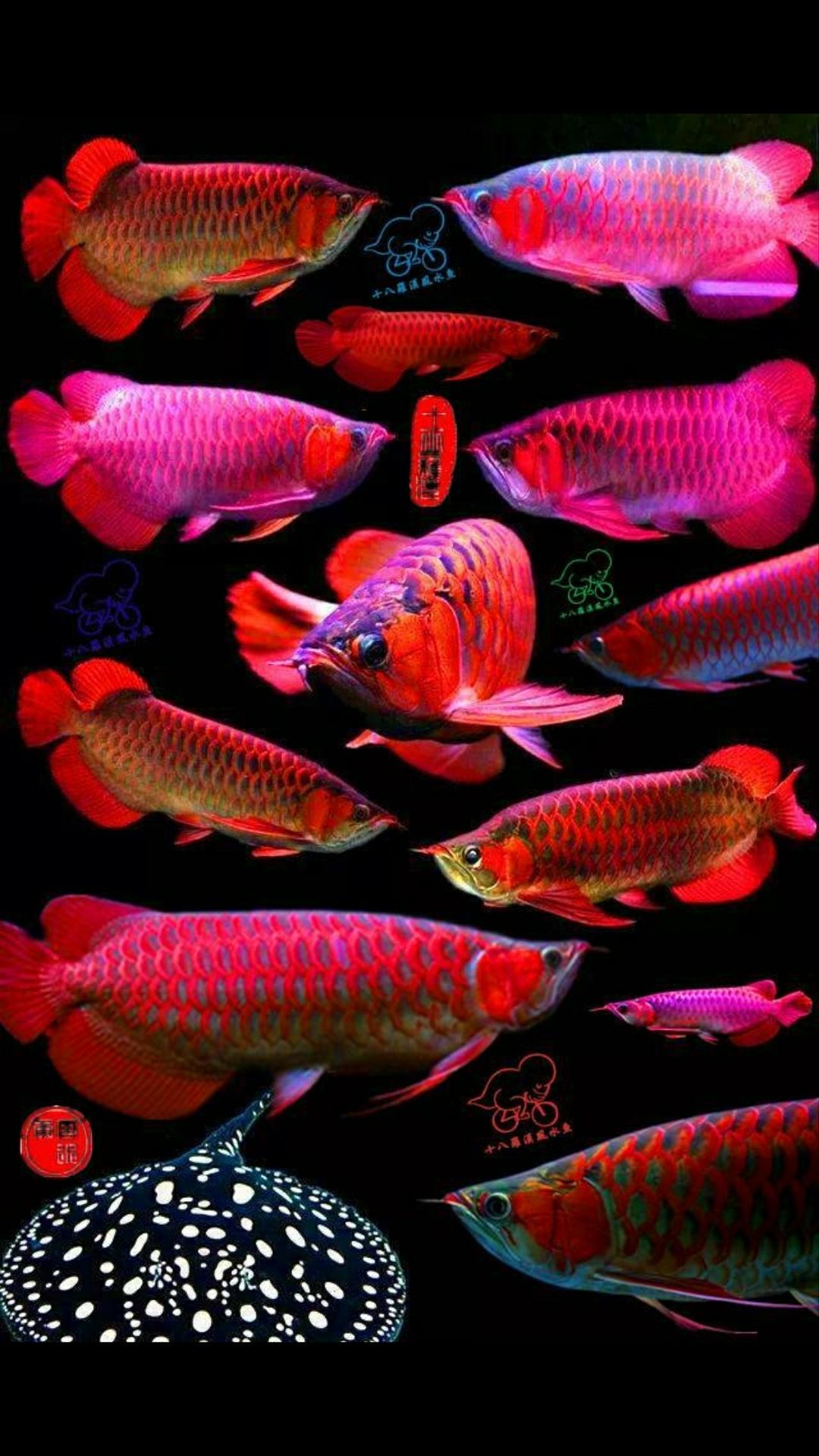 分享几张桌面图 西安观赏鱼信息 西安博特第3张