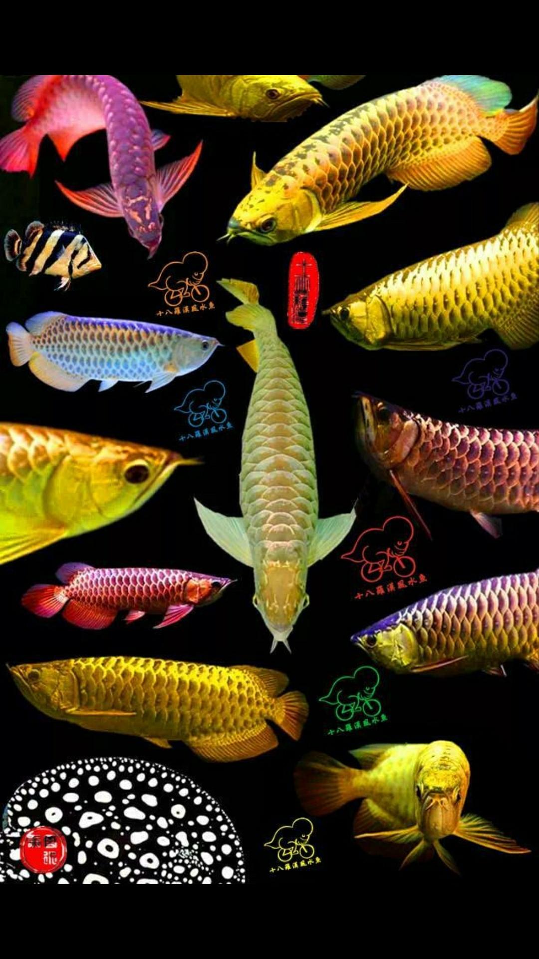 分享几张桌面图 西安观赏鱼信息 西安博特第4张
