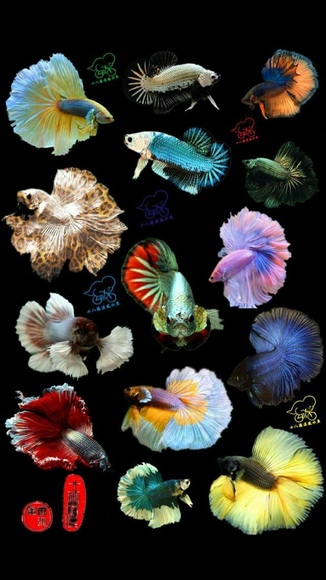 分享几张桌面图 西安观赏鱼信息 西安博特第6张
