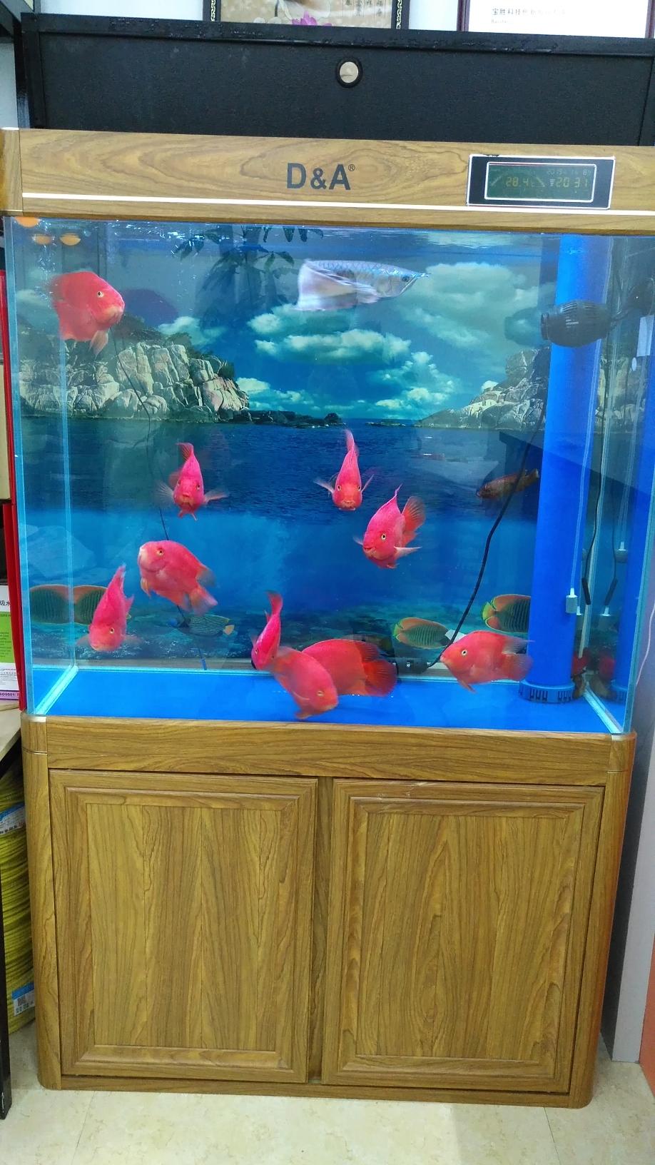 检疫后清洗过滤 西安观赏鱼信息 西安博特第1张