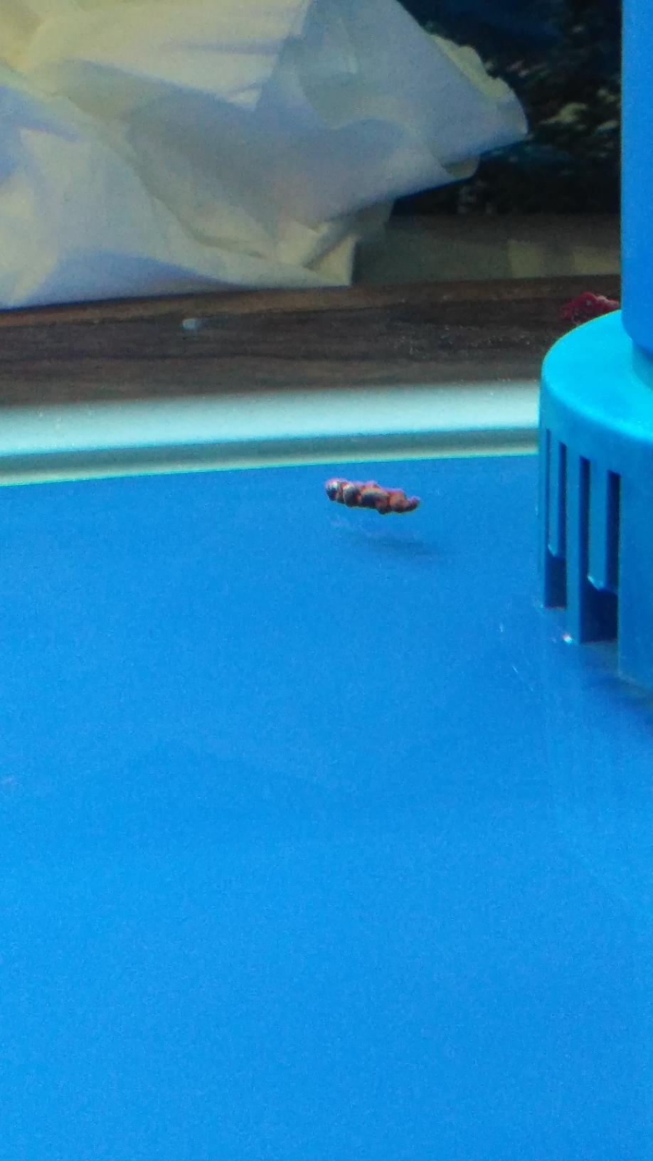 检疫后清洗过滤 西安观赏鱼信息 西安博特第2张