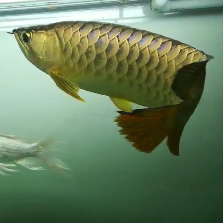 【西安黄金鼠鱼】就算是三无产品的你依然阻挡不了属于你的美