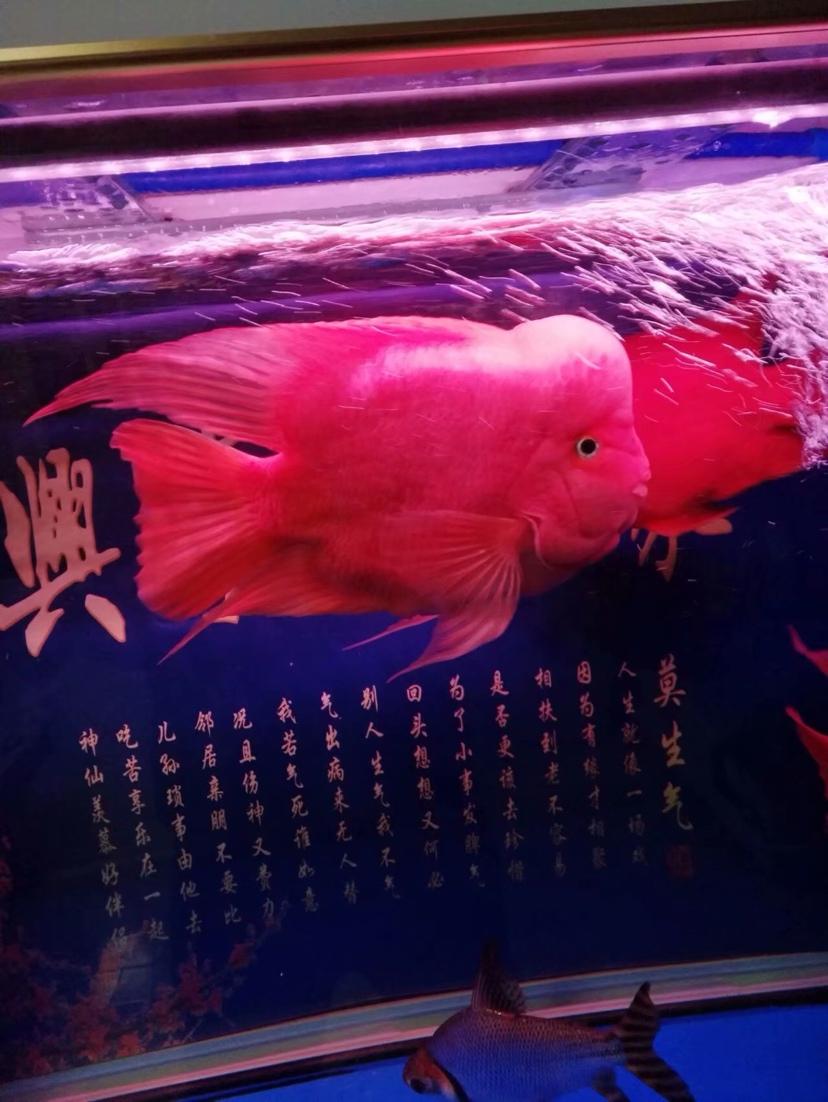 飘逸起来 西安观赏鱼信息 西安博特第1张