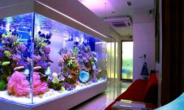 飘逸起来 西安观赏鱼信息 西安博特第2张