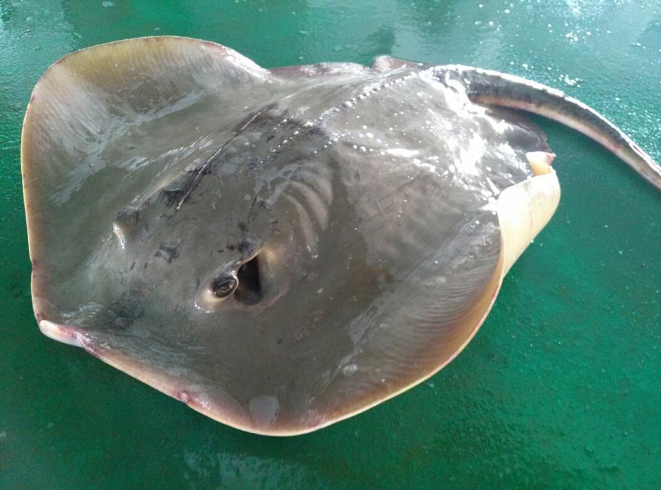 【西安哪个水族店有大白鲨】刚做了拔鳞手术待恢复 西安观赏鱼信息