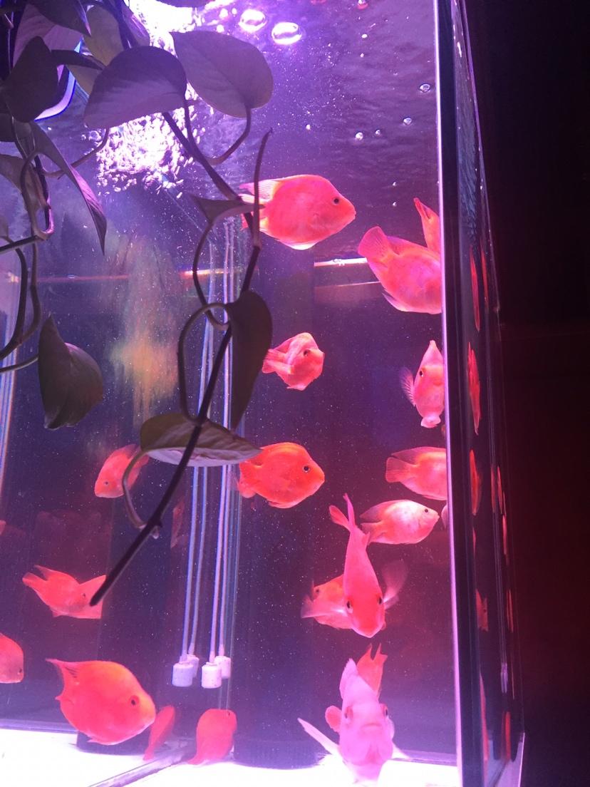 【西安大鱼缸价格】过滤棉多久洗一次 洗完后要加硝化细菌吗 西安观赏鱼信息 西安博特第1张