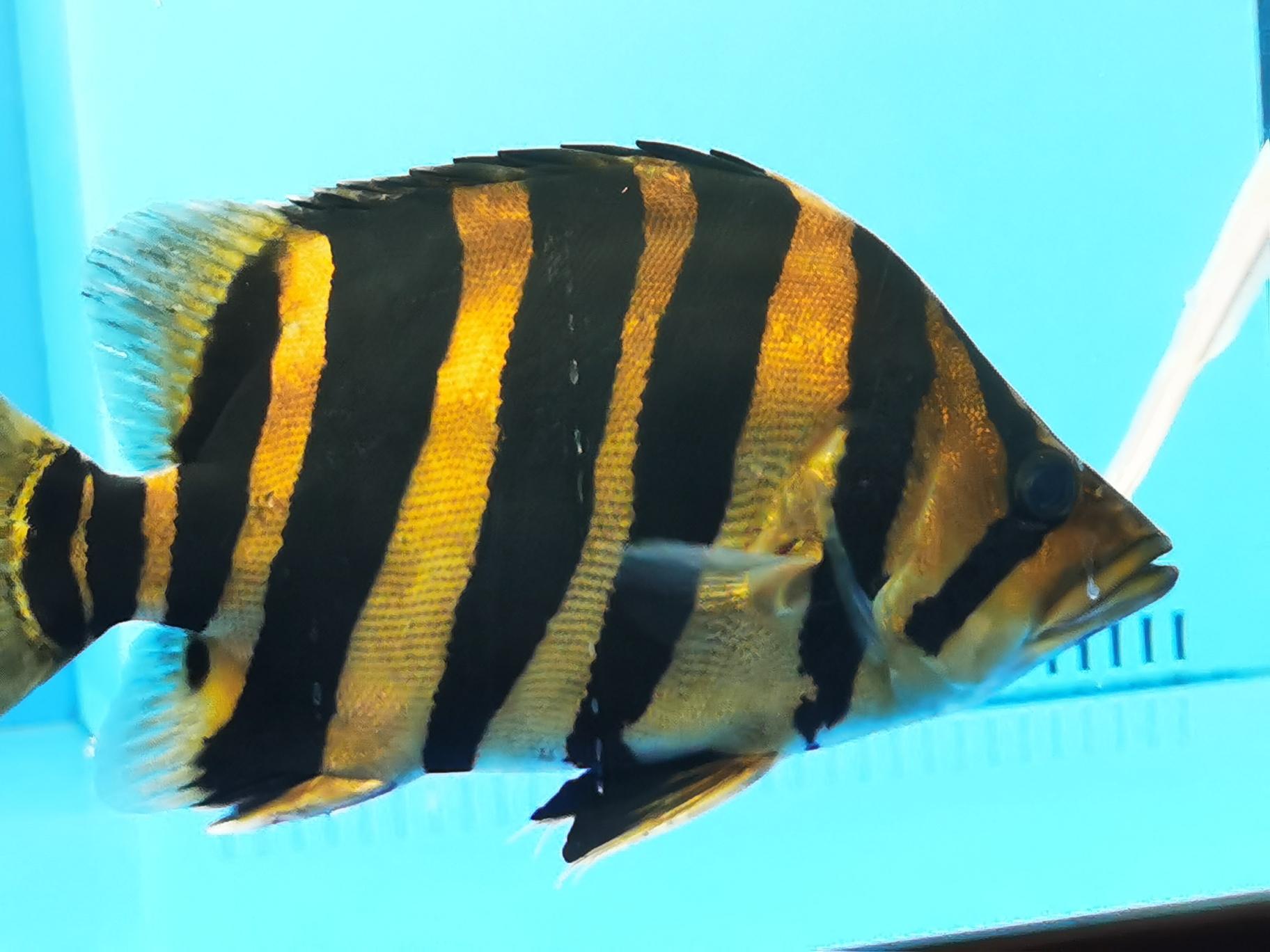 虎虎虎 西安观赏鱼信息 西安博特第5张