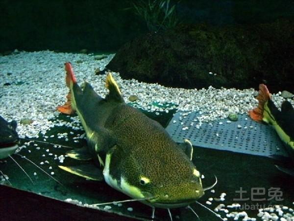坚决不出门 西安观赏鱼信息 西安博特第2张