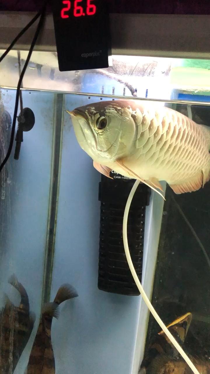 想不想到大河去游一游啊 西安观赏鱼信息 西安博特第1张