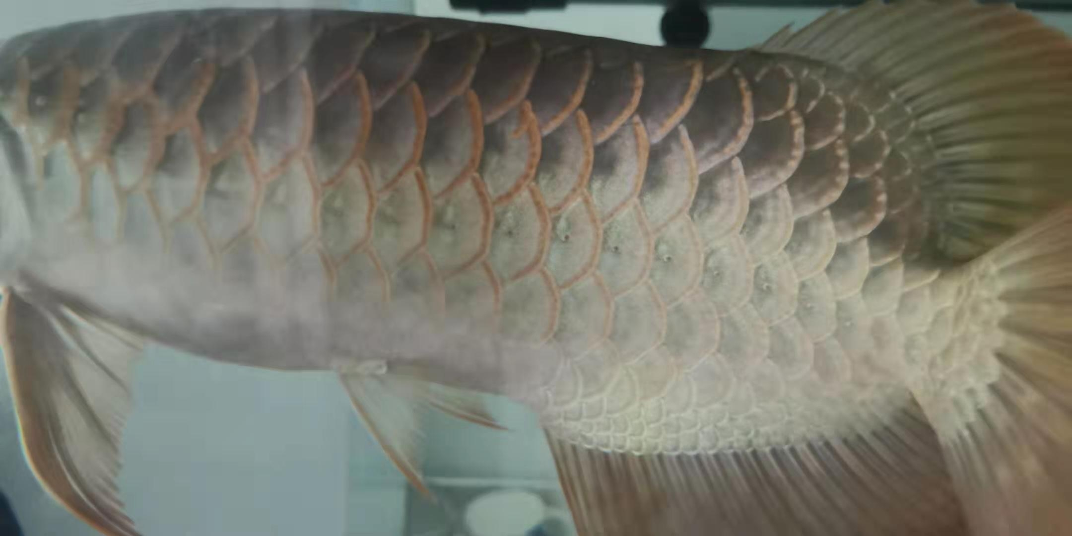是病吗? 西安观赏鱼信息 西安博特第1张